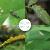 zhongbao(ZhB)チムジリン水稲シラミの実と野草シラミアブラムシ農薬アルロタイ殺虫剤チムジン+ビフェニルキク10 g袋入り
