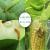 リボ2%甲維塩2.3%甲アミノアビ菌安息香酸塩甜菜夜蛾農薬殺虫剤200 ml/瓶