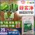 アブラシシシラミ正味10%ピロリンアブラミパセリ農薬殺虫剤10 g水稲果物花卉アザミアブラムシ10 g