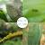 zhongbao(ZhB)zhongbao阿楽泰稲シラミの実と野菜のアブラムシ殺虫剤の農薬25%ピオアブラムケトン100 gボトル