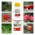 金満枝丁フッ素ダニエステルの月季の花イチゴのミカンの葉のダニの赤いクモはダニ剤の金満枝の米国の富美の実を殺して安全に農薬の殺虫剤の10ミリリットルを輸入します。