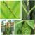 リボ20%ピロリン殺虫剤パテ虫植物通用野菜果物アブラムシ駆虫剤アザミ植物殺虫剤1000 g*5本