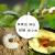 効率的なクロロフルオロゾル菊エステル10%カンフー殺虫剤果物野菜アブラムシ青ゴキブリアリ地下害虫1000 ml