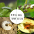 効率的なクロロフルオロゾル菊エステル10%カンフー殺虫剤果物野菜アブラムシ青ゴキブリアリ地下害虫500 ml
