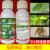 jialeshiアビツリシンは、赤と白のクモの巣がいっぱいです。Cingnicは、赤いクモダニアビダニアビタゾールの農薬殺ダニ剤です。