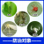 99%鉱物油果物ブドウ清園剤メシェル虫赤蜘蛛煙シラミ農薬殺ダニ剤1000 ml*5本