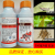 ポリジアレヒアビツベルンのダニロール柑橘の月季の花、赤い蜘蛛ダニ専用薬、殺虫剤500 ml
