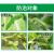 ググヤング立克山菜果物除殺虫剤青虫土虫アブラムシ毛虫洋辛子農薬水200 ml