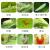 砂漠沃聯ベンゼン菊エステル茶葉専用の薬草茶葉蝉茶尺取虫茶毛虫シラミ茶樹農薬殺虫剤1000 g