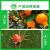 阿维螺螨酯红白蜘蛛专用药柑橘花卉野菜瓜果物农用药高效杀螨虫剂 10ml
